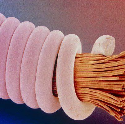 Cuerda de guitarra ampliada con microscopio
